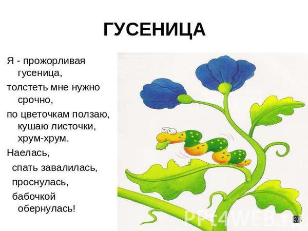 Сад-Огород - фото2